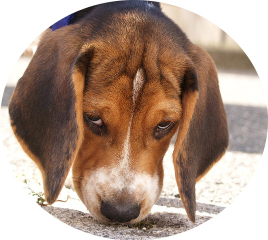 Nosandehund